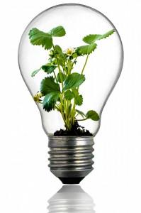 bulb-216975_1280